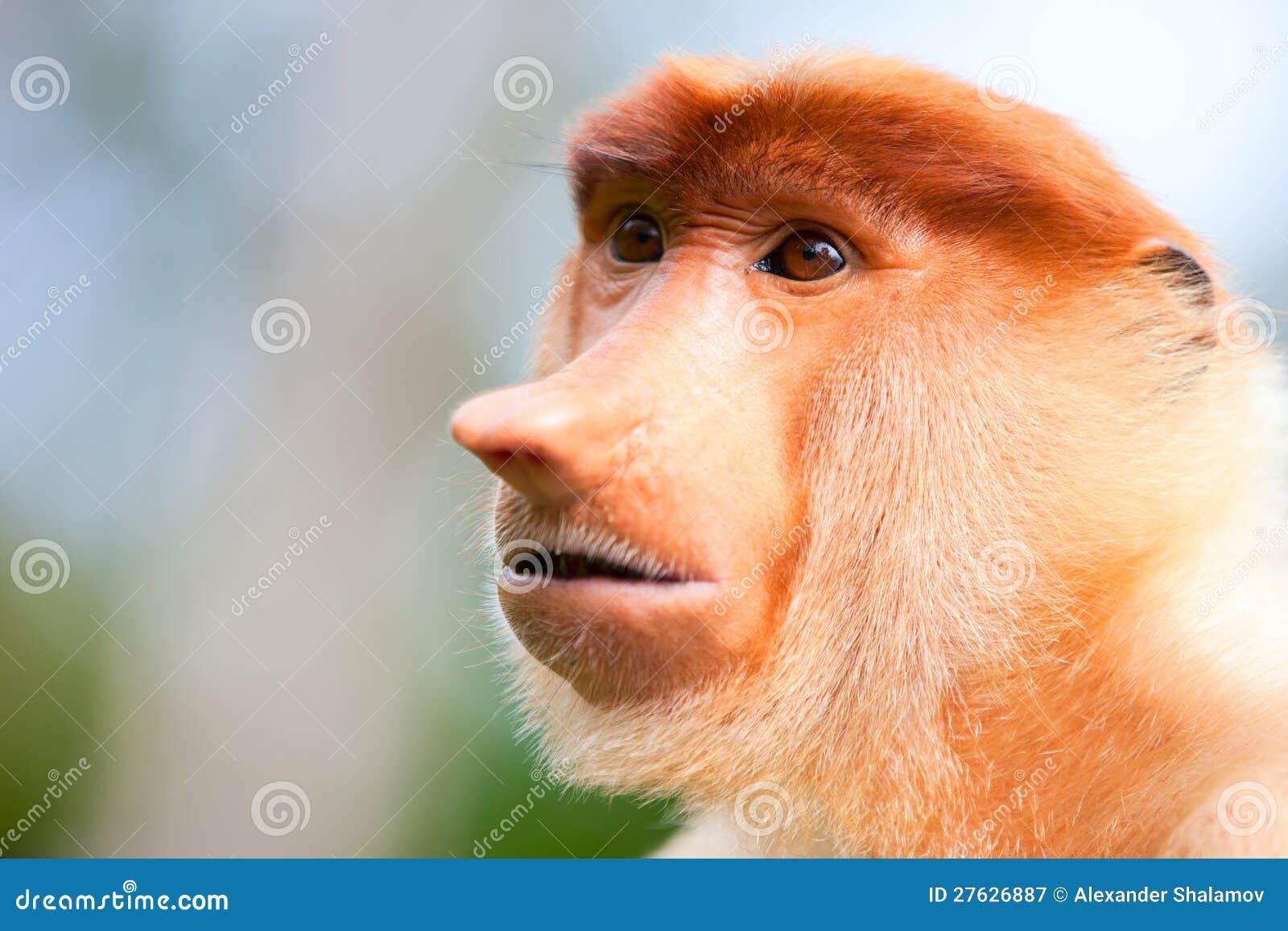 De aap van zuigorganen