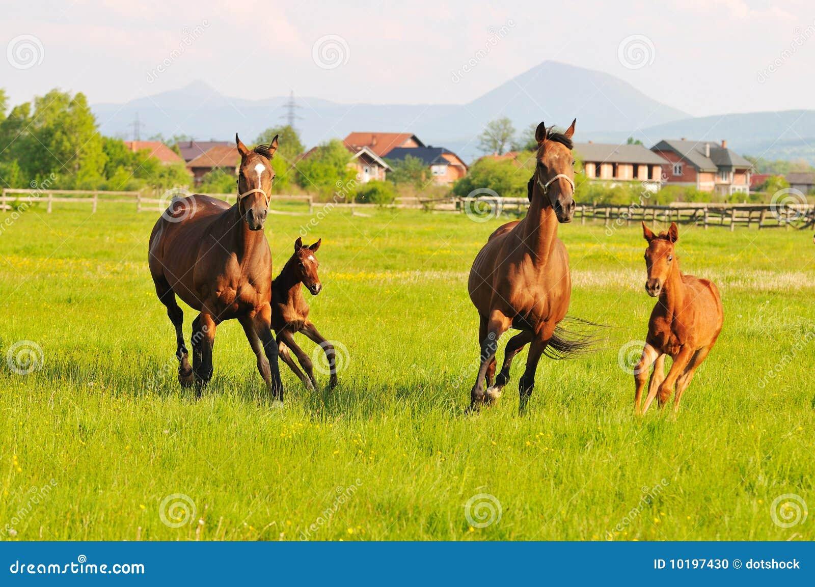 Het mooie paard in aard stelt en heeft familierelatinship in werking