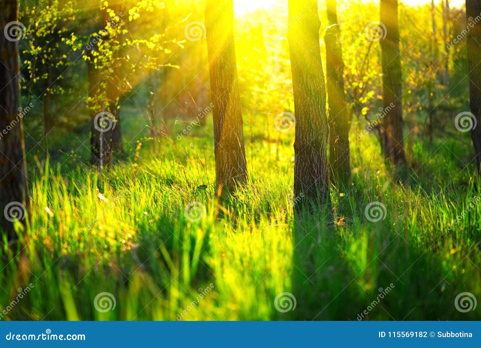 De aard van de lente Mooi landschap Park met Groene Gras en Bomen