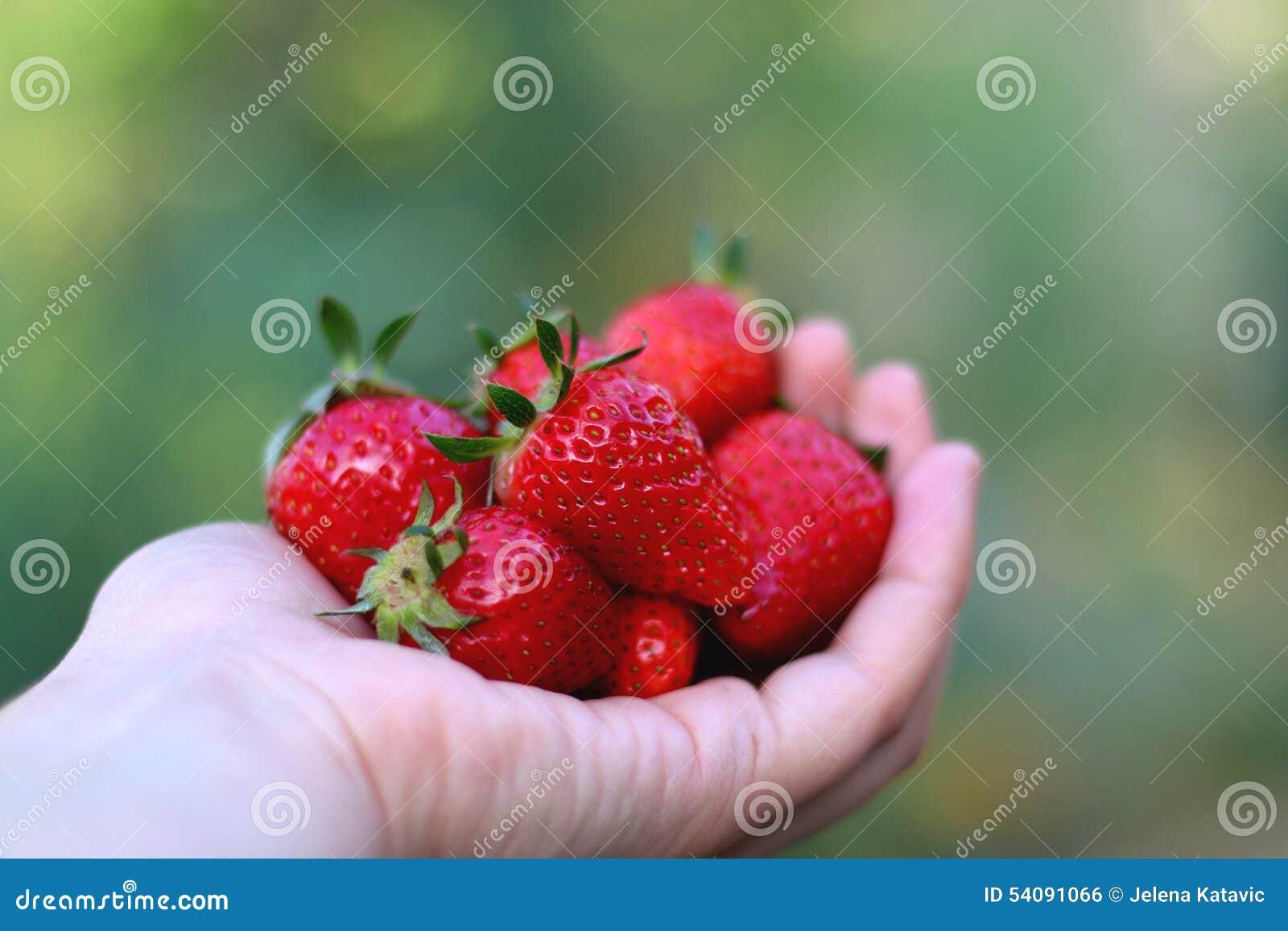 De aardbeien van de handholding