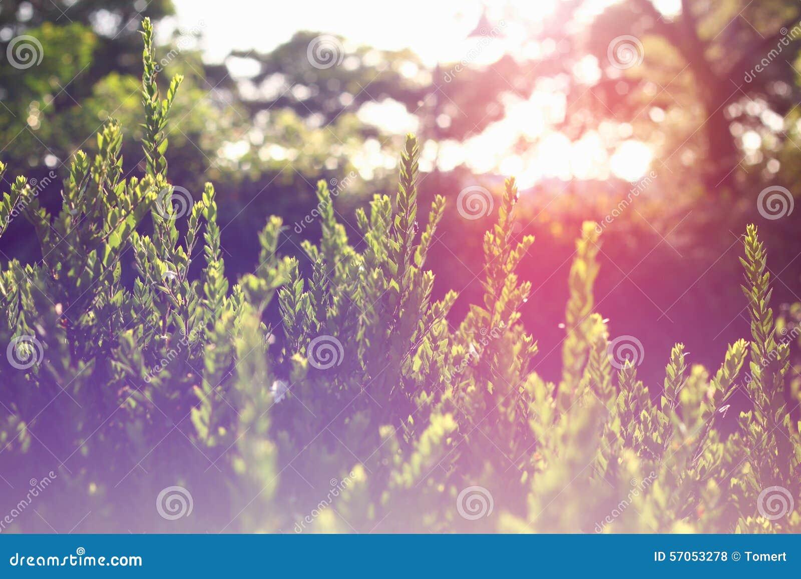 De abstracte foto van licht barstte onder bomen en schittert bokeh lichten het beeld is vaag en gefiltreerd