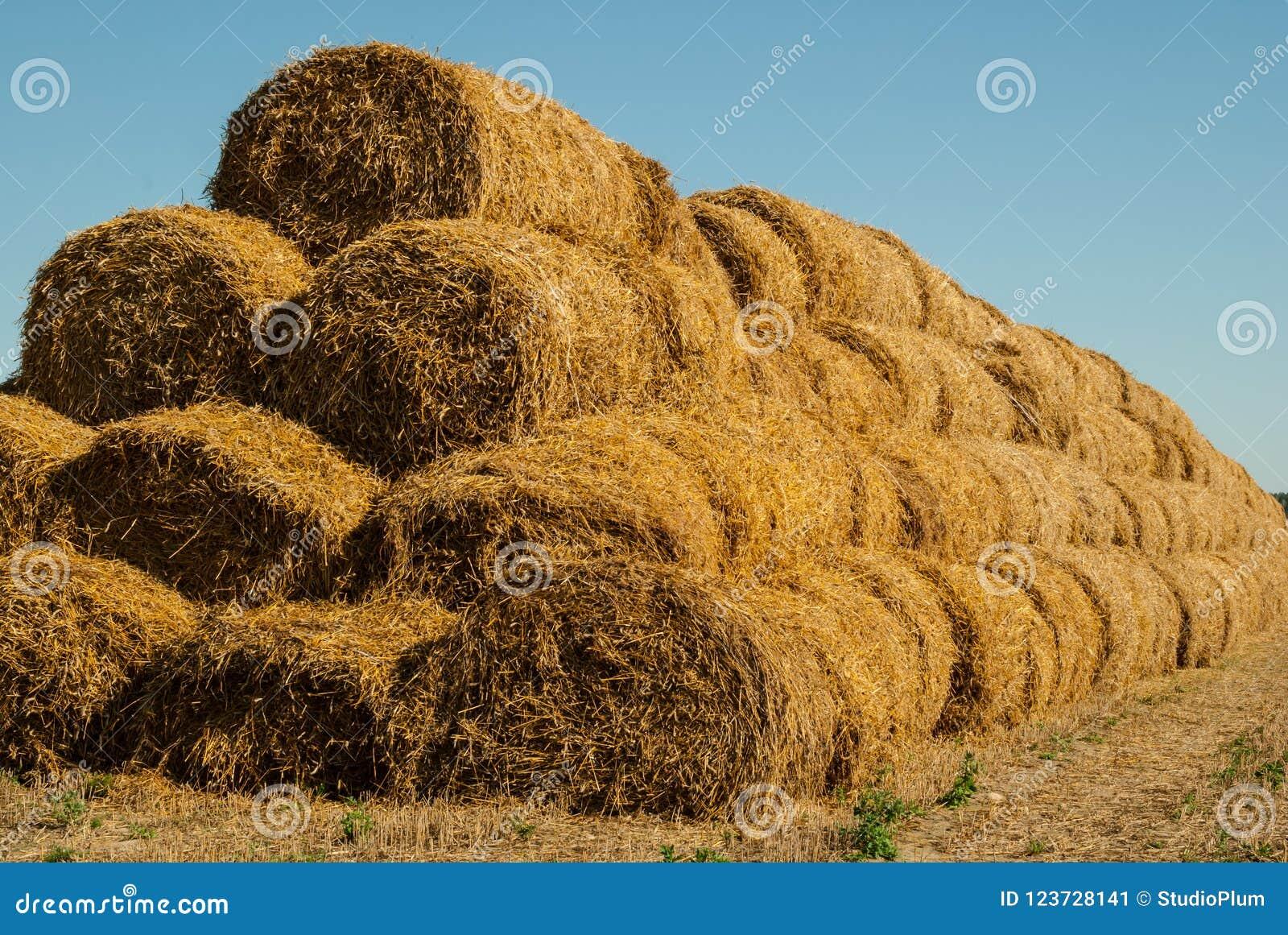 De achtergrond van de blauwe hemel en het gele stro, het de zomerlandschap, het oogsten zal ideaal gezien de achtergrond van insc