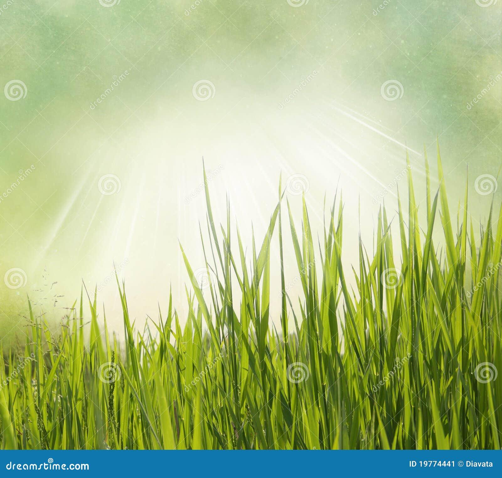 De achtergrond van de aard met gras