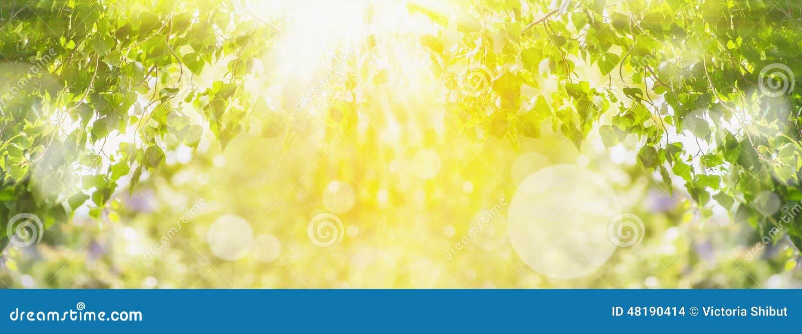 De achtergrond van de de lentezomer met groene boom, zonlicht en zonstralen