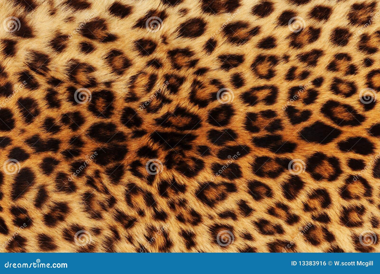 De achtergrond van de luipaard