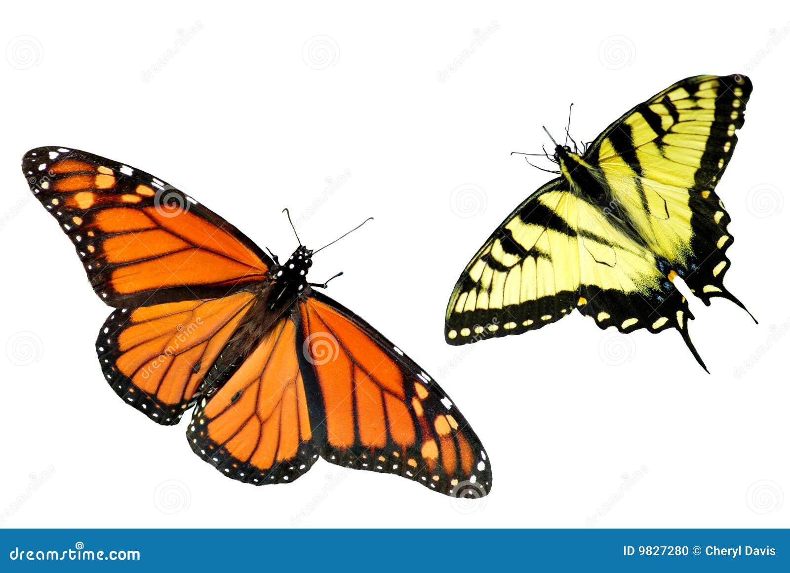 De Achtergrond van de monarch en van de Vlinder van Swallowtail van de Tijger
