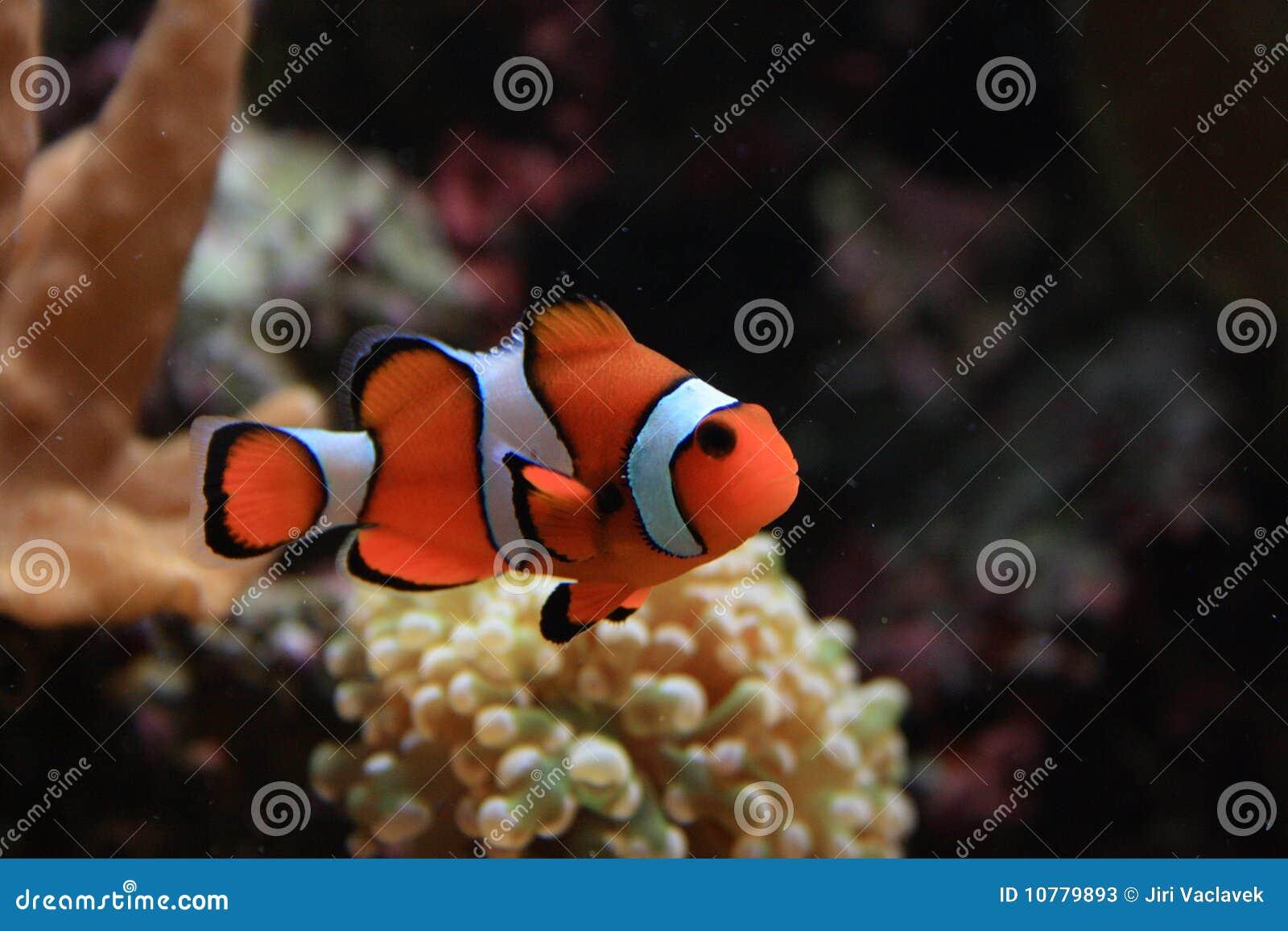 De achtergrond van het aquarium
