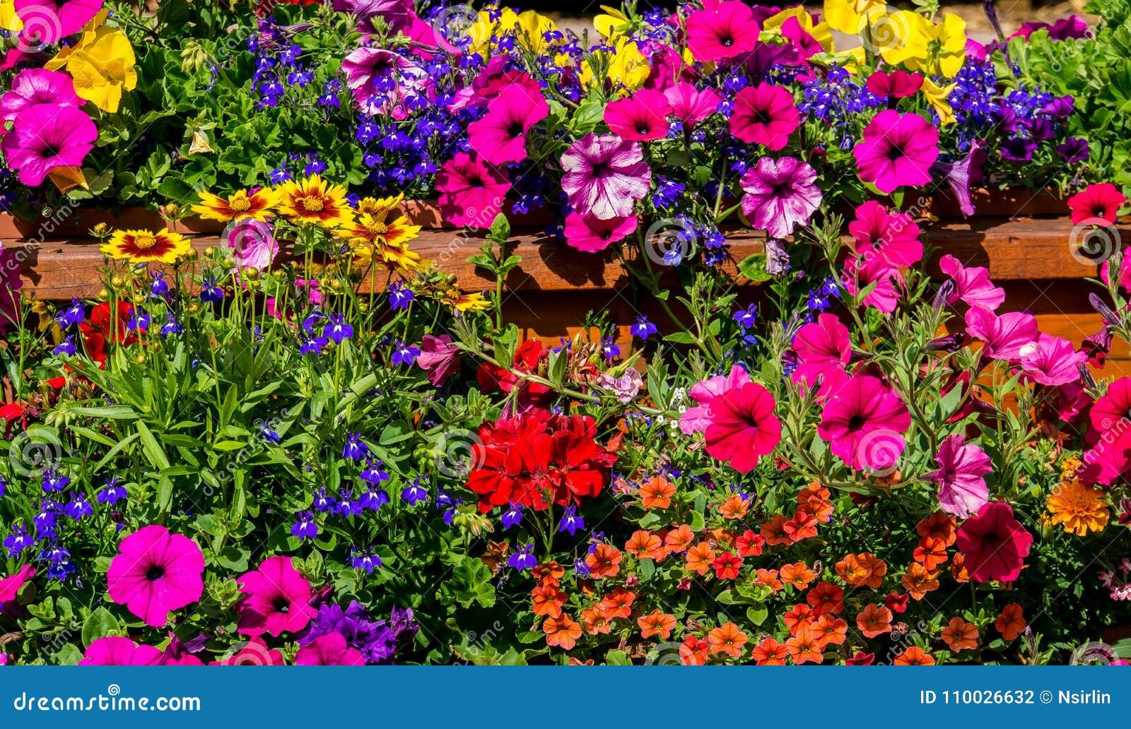 De Achtergrond van het bloemengebied