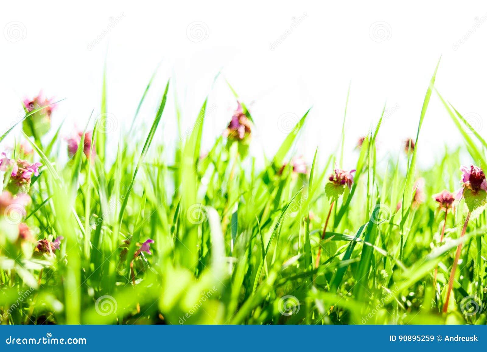 De achtergrond van het de lentegras