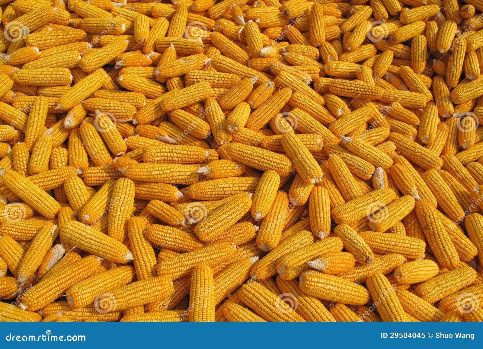 De Achtergrond van het graan