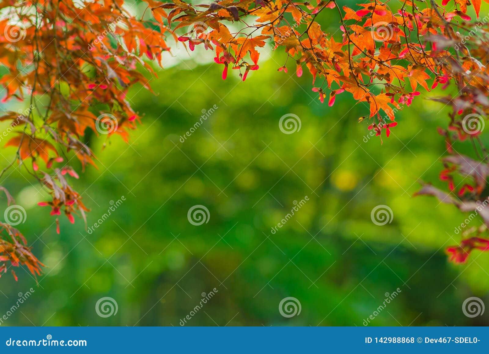 De achtergrond van het de herfstkader