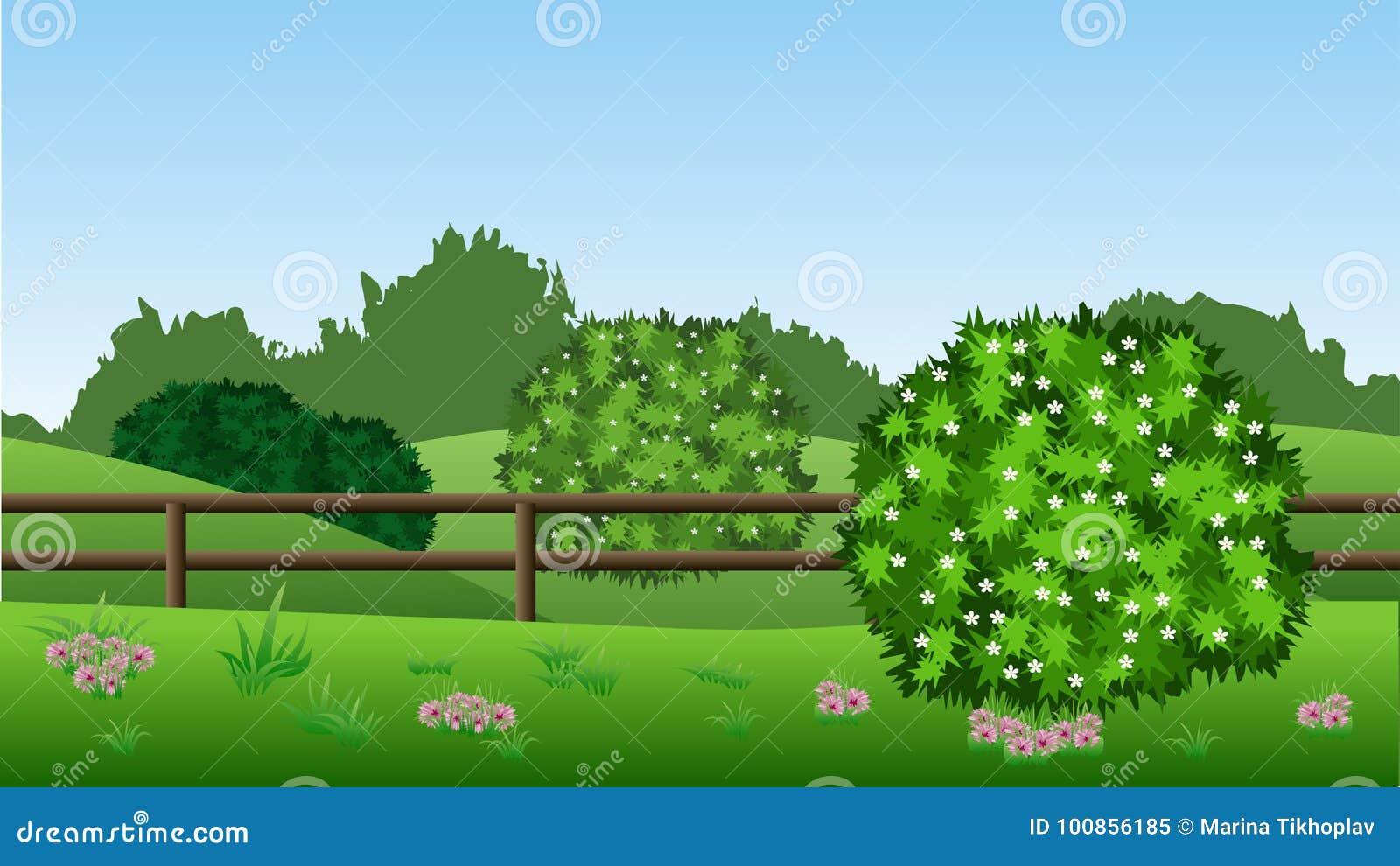De achtergrond van het de zomerlandschap met groene struiken in bloesem, heuvels,