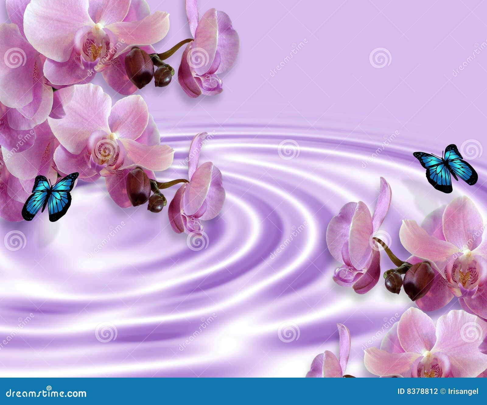 De Achtergrond van orchideeën en van Vlinders