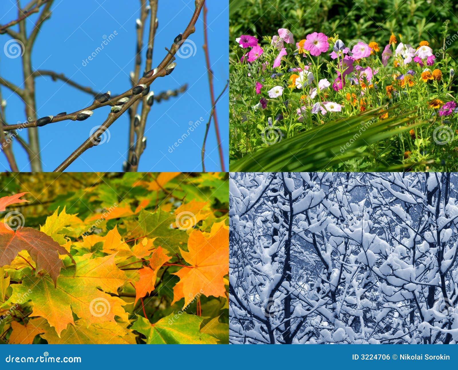 De achtergrond van seizoenen royalty vrije stock for Les jardins 4 saisons