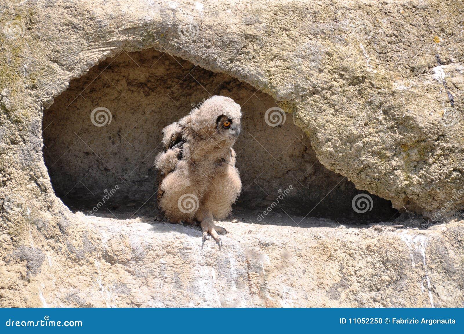 De adelaar-uil van de baby