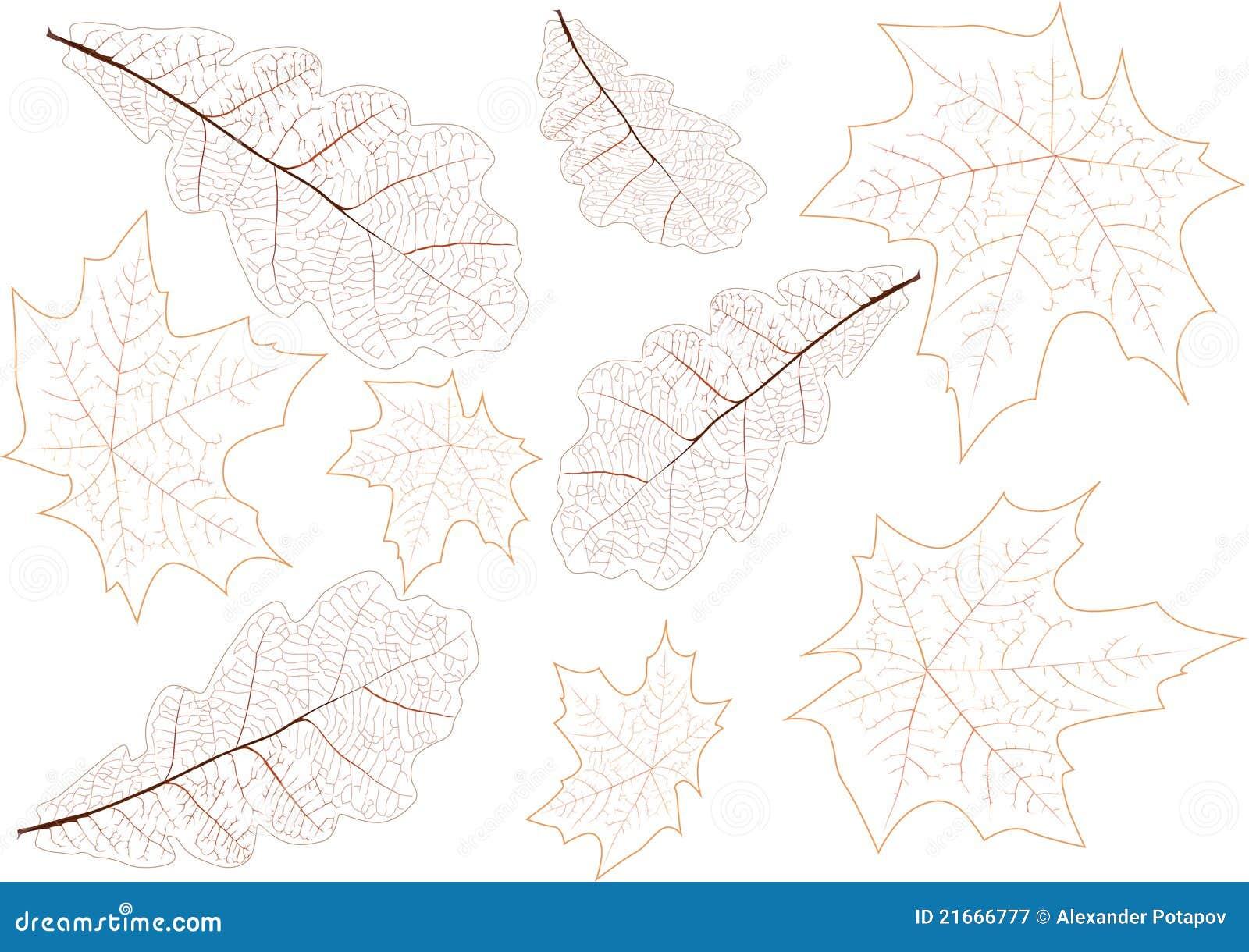 De aders van achtergrond bladeren illustratie