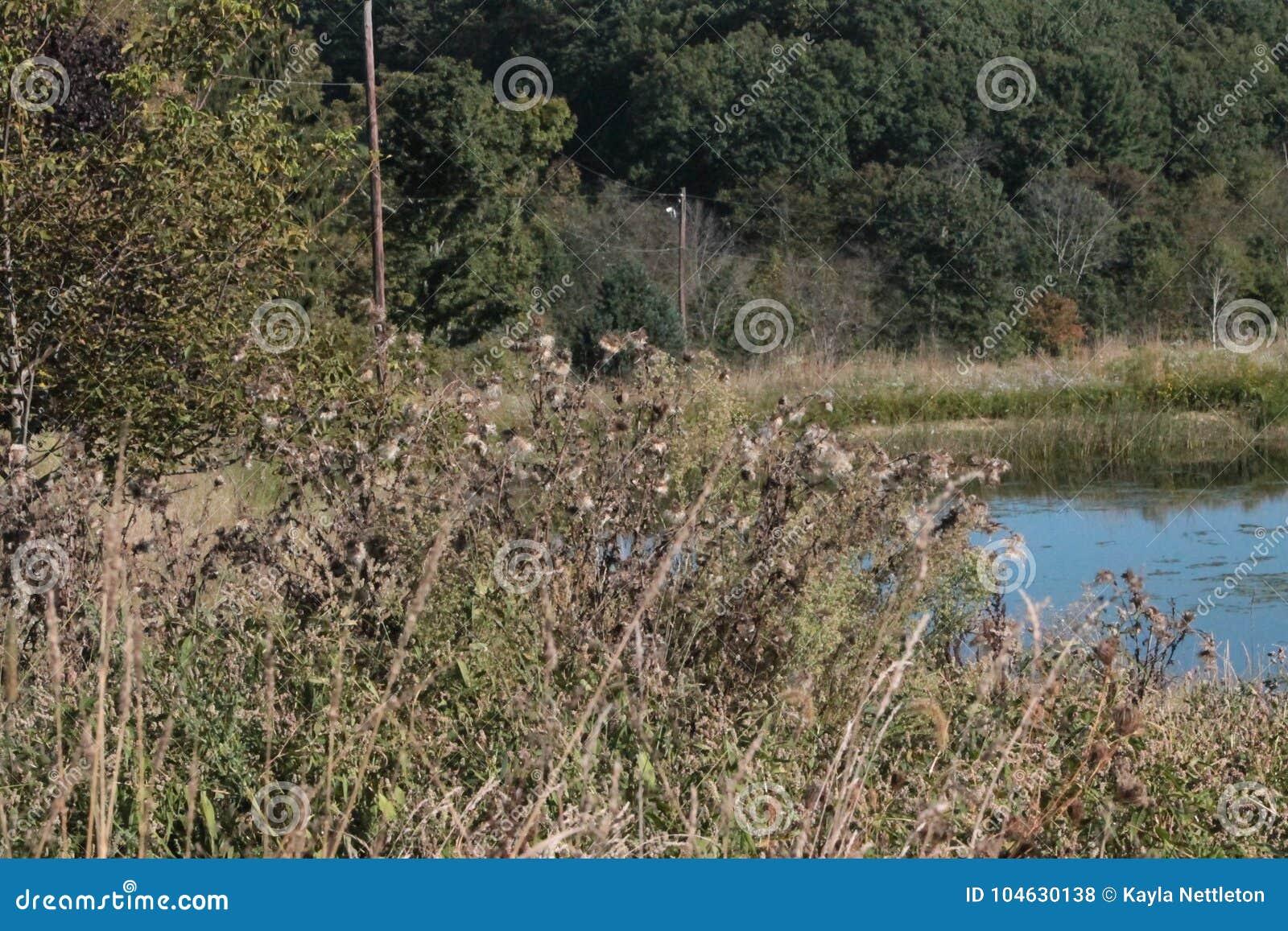 Download De algen neemt over stock foto. Afbeelding bestaande uit groen - 104630138