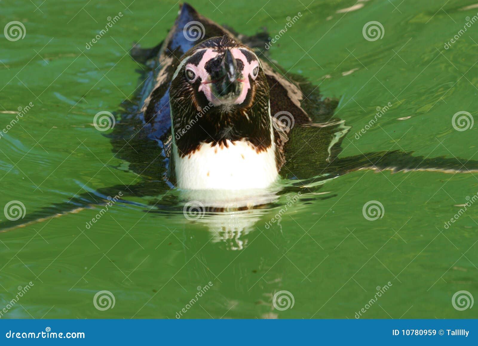 De ambacht van de pinguïn
