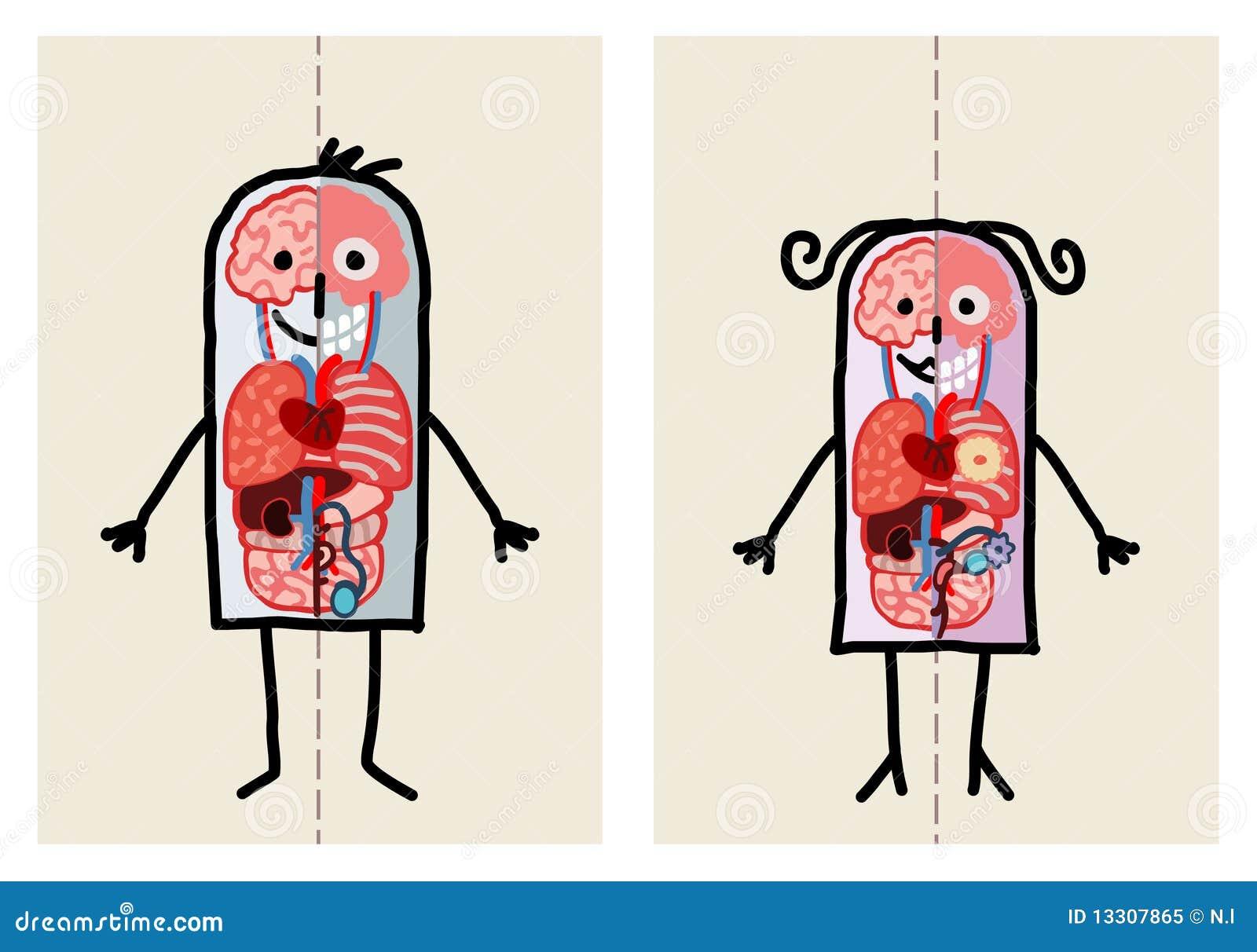 De anatomie van de man & van de vrouw