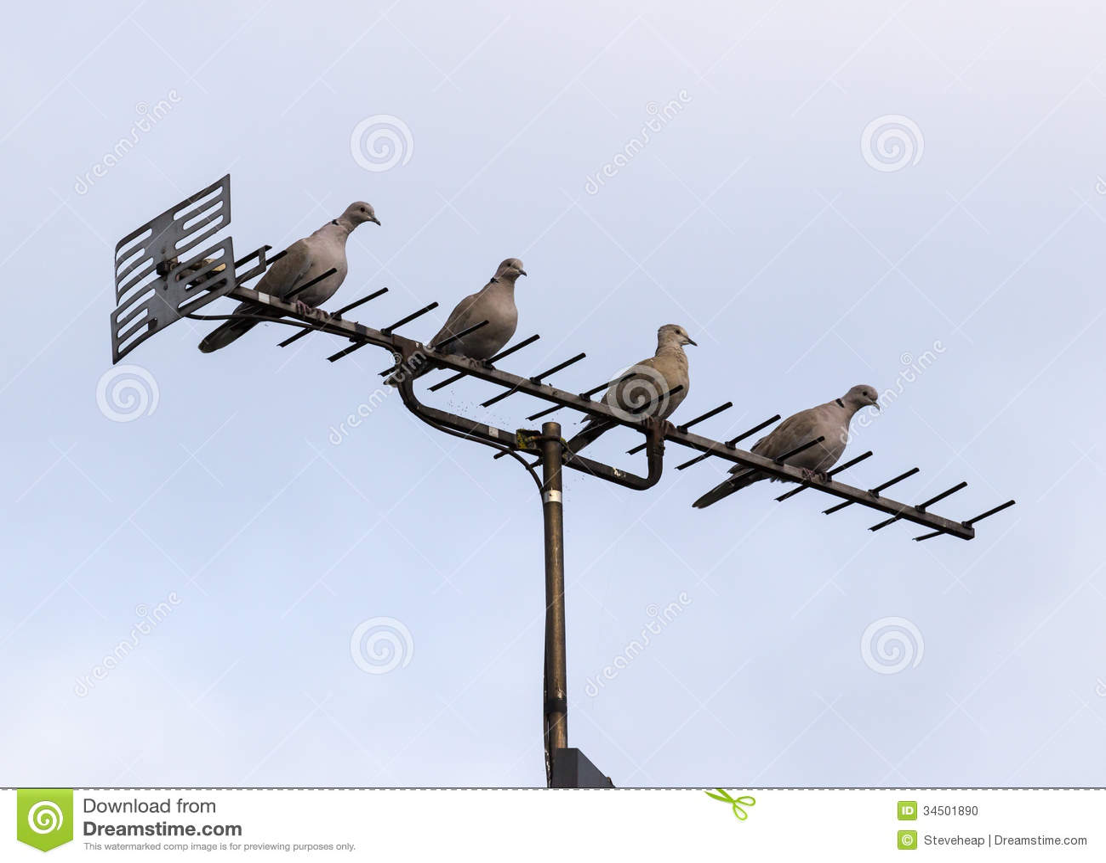 De antenne of de antenne van tv met vier duiven stock foto for Antenne de tv exterieur