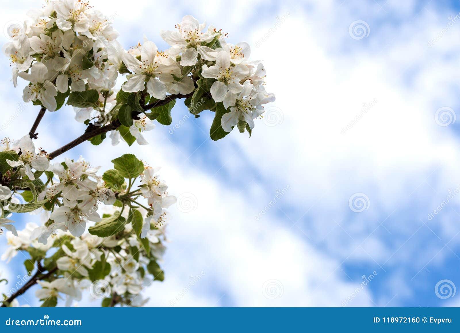 De appel-boom van bloemen