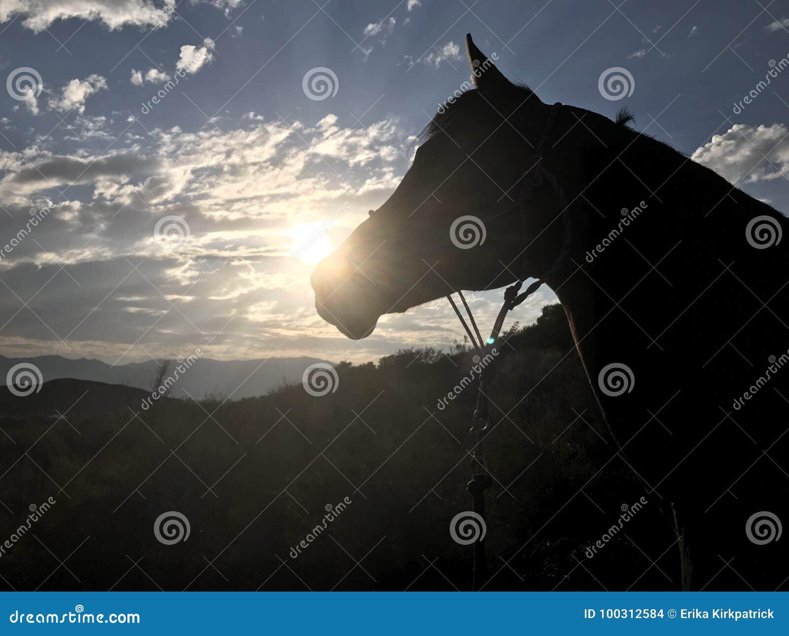 De Arabische Zonsondergang van het Paardsilhouet