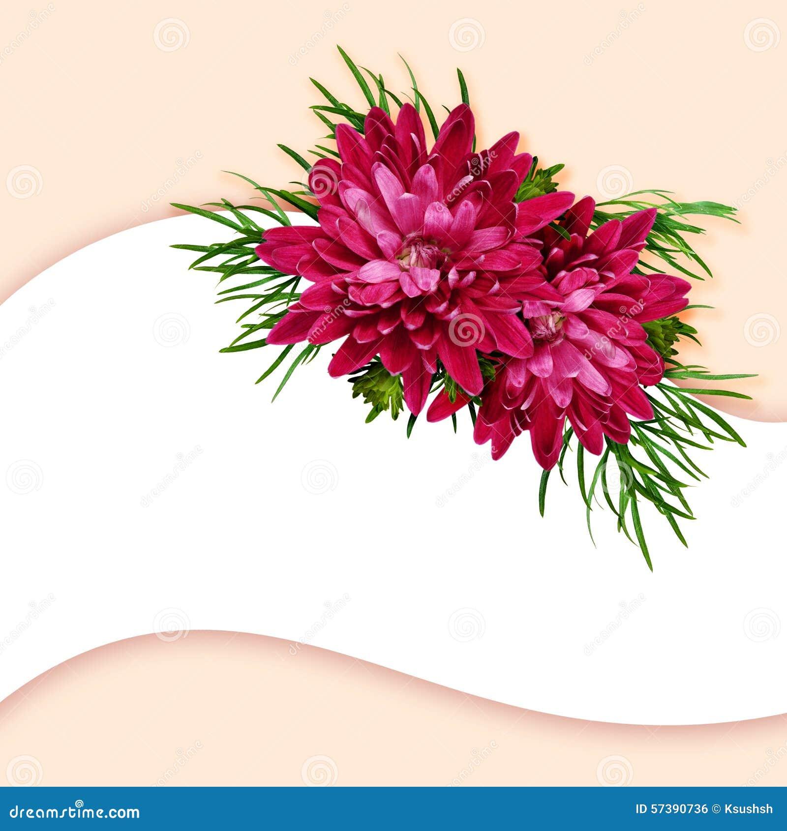 De aster bloeit samenstelling