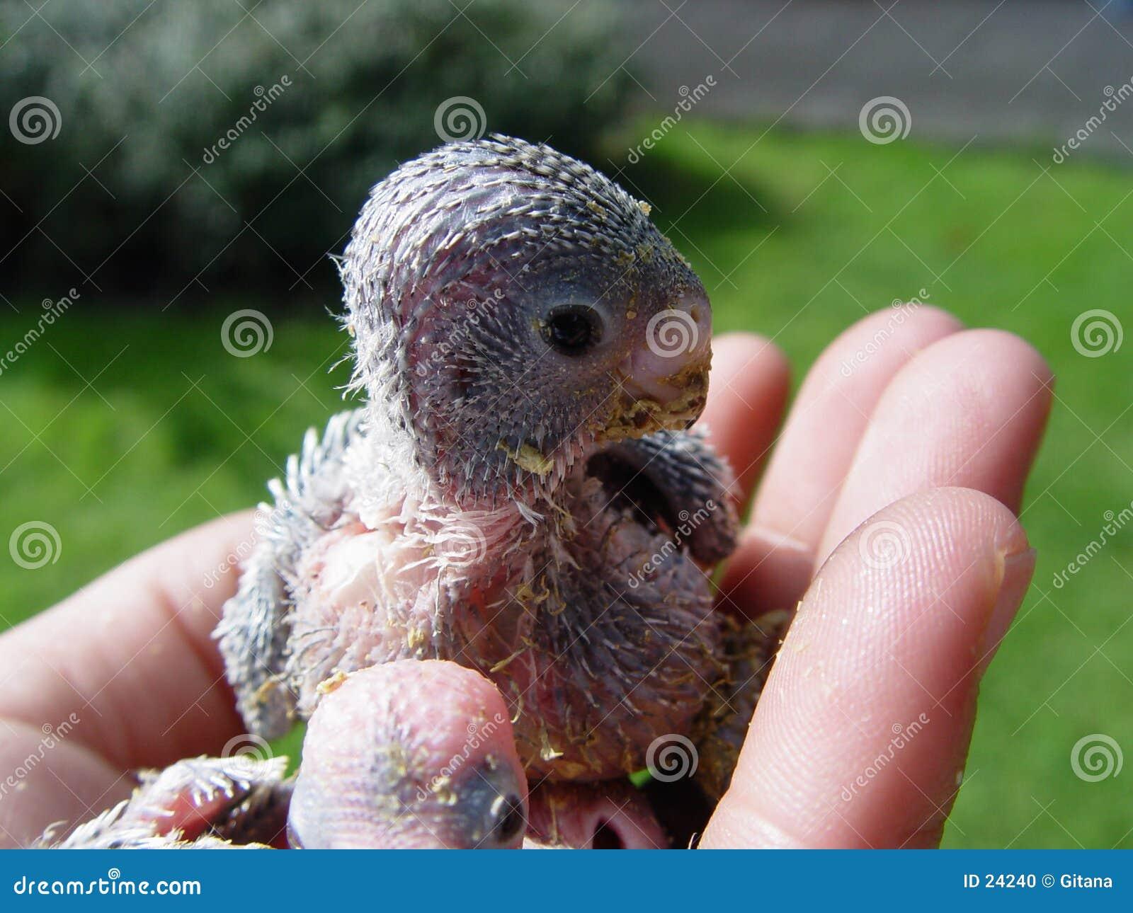 De baby van de vogel