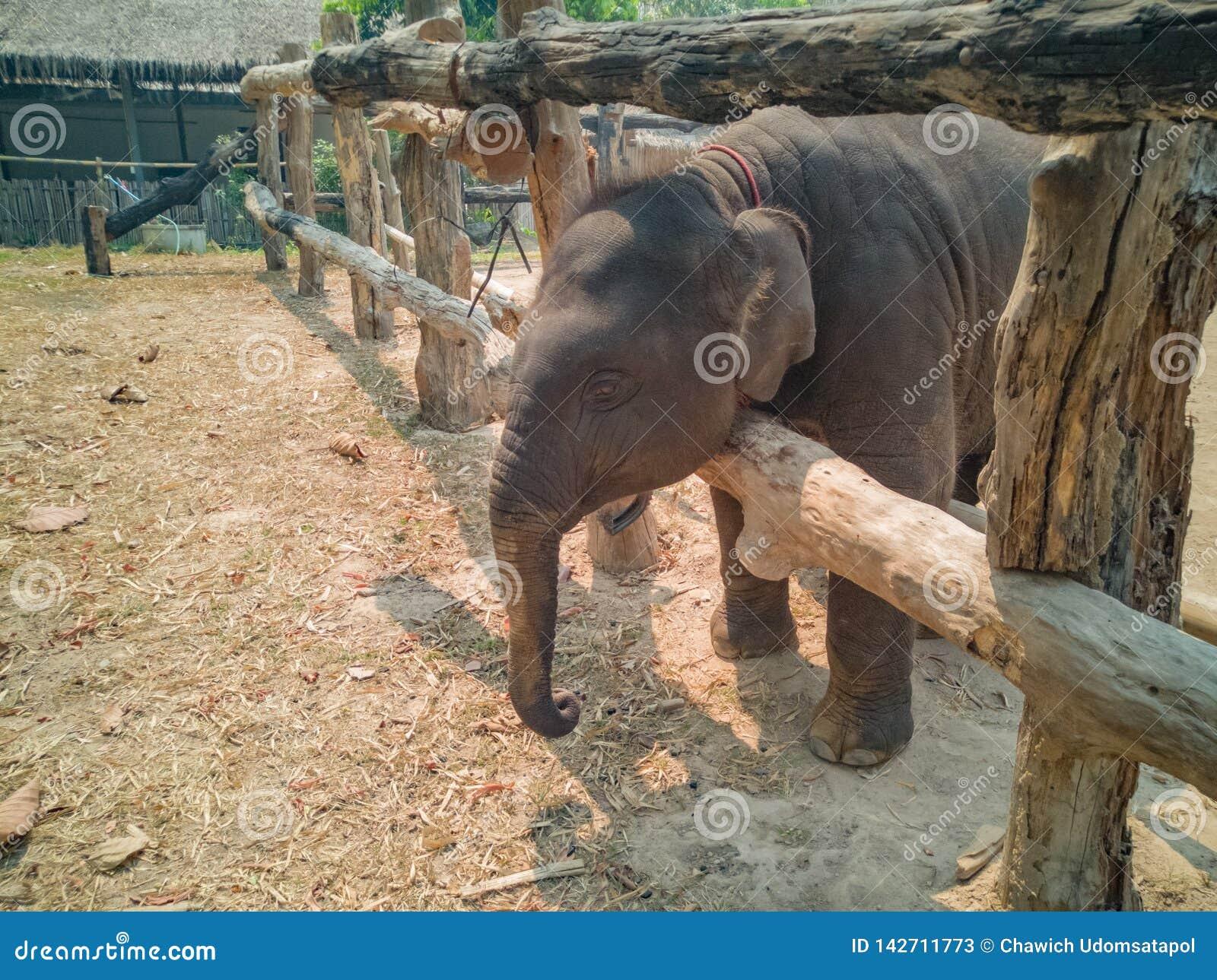 De babyolifant in hun drijft bijeen