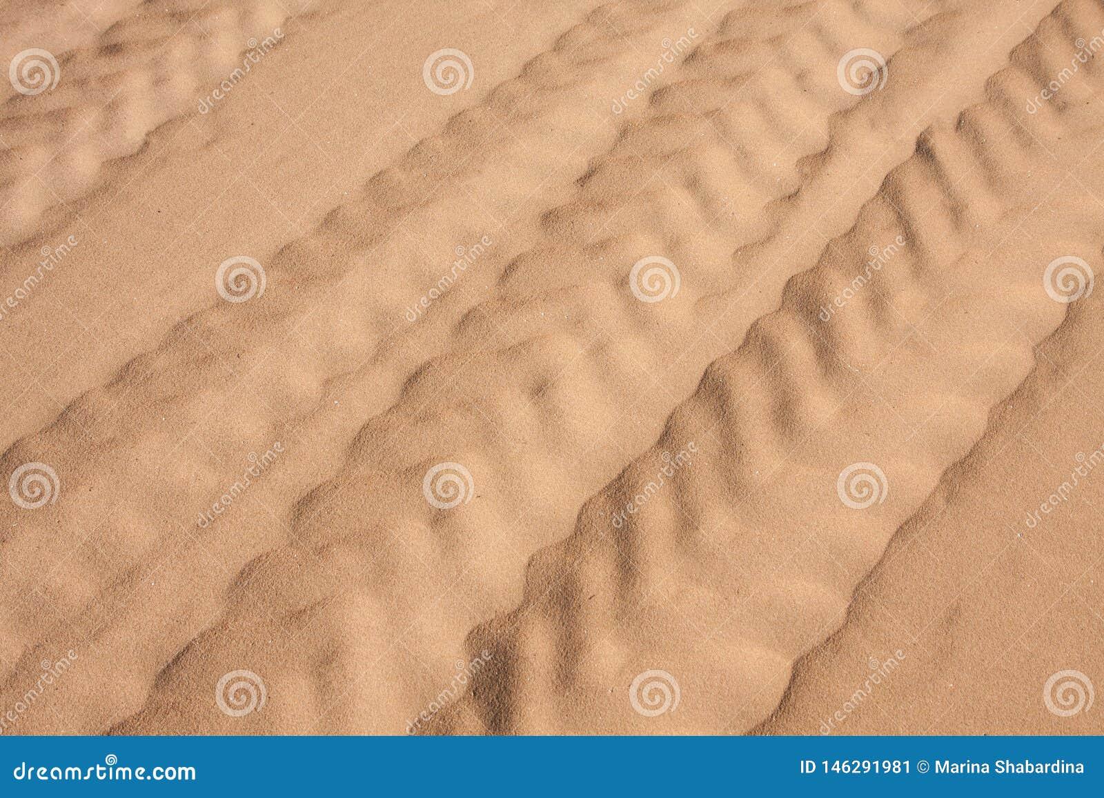 De bandsporen in het fijne zand