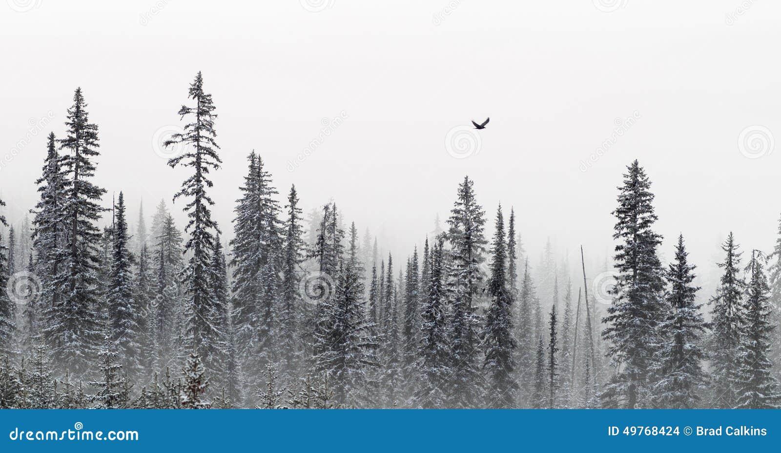 De banner van de winterbomen