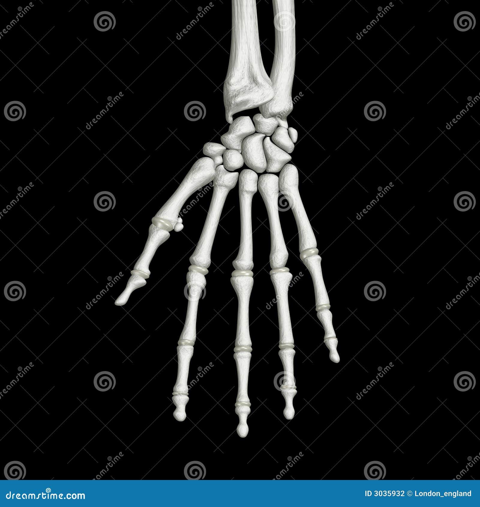 De Beenderen van de hand
