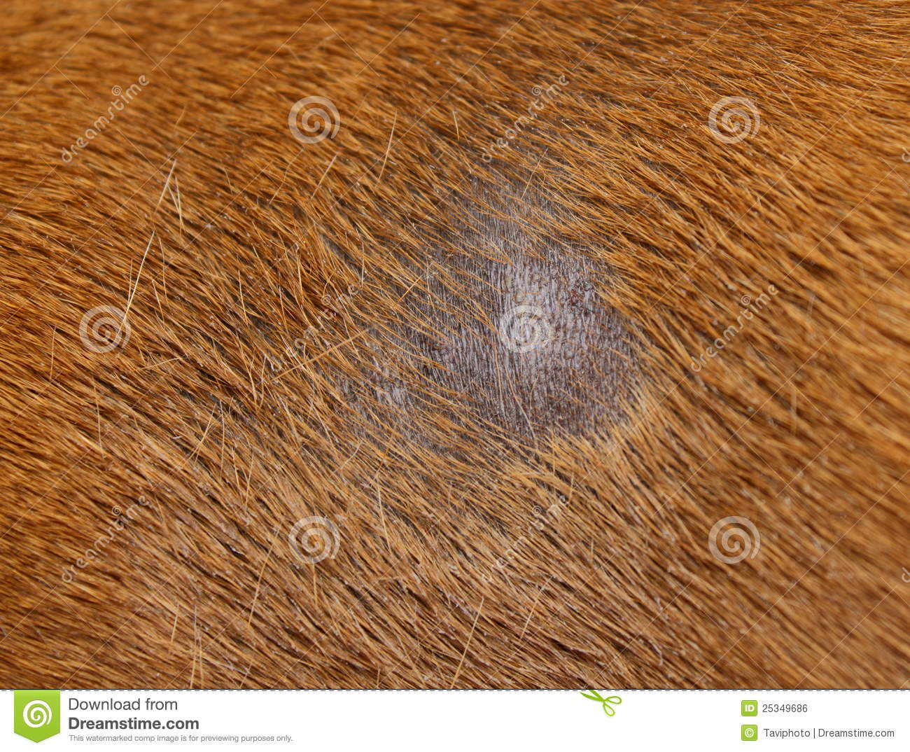 Skin Yeast Infections In Dogs Pictures
