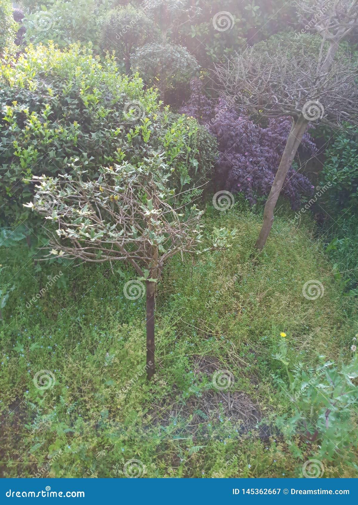 De besnoeiingsbomen