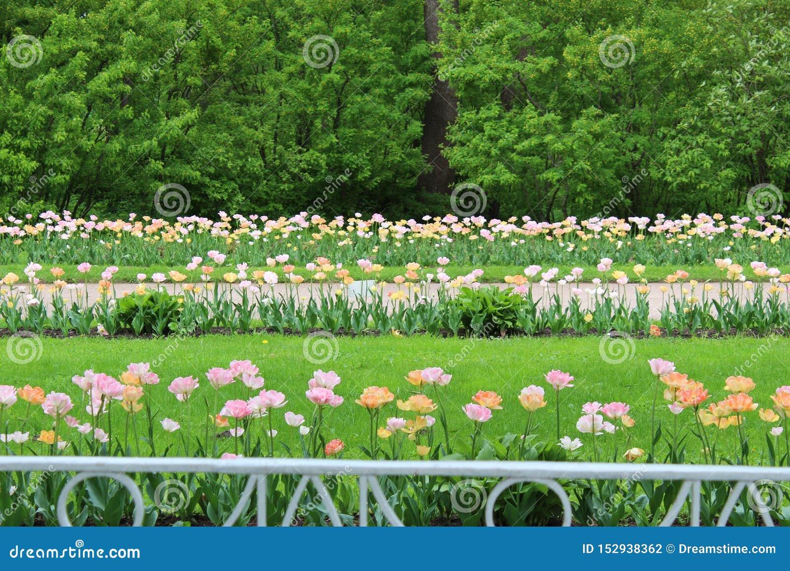 De beste tijd het besteden lente in de stad is een bloeiend park