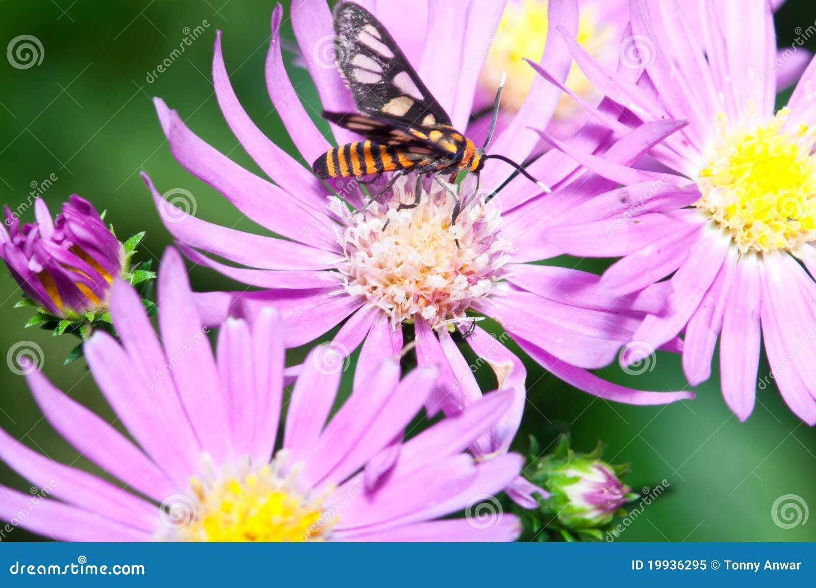 De Bestuiving van het Insect van de aard