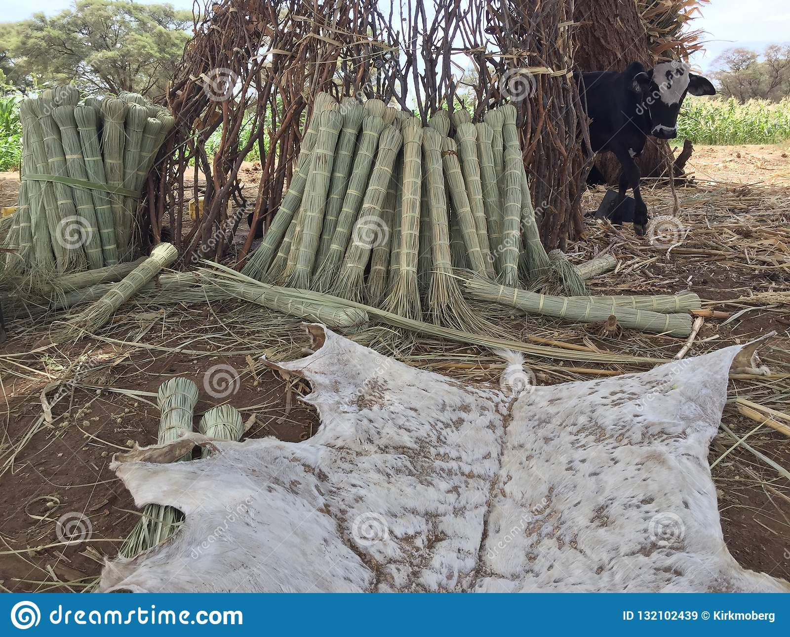 De bezems en de zweep van Afrika met koe