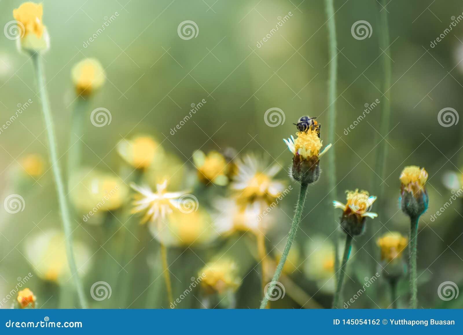 De bij op de bloem