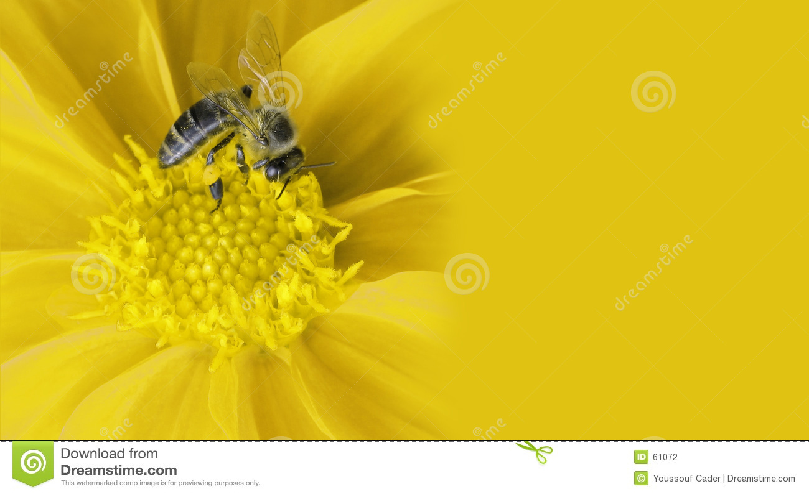 De bij van de honing op bloem