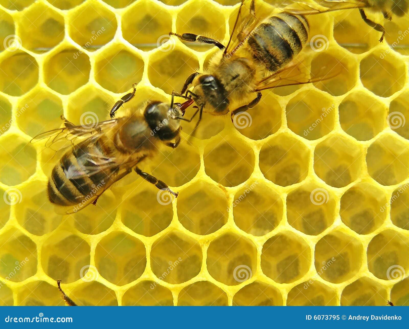 Citaten Over Bijen : De bijen communiceren stock afbeelding