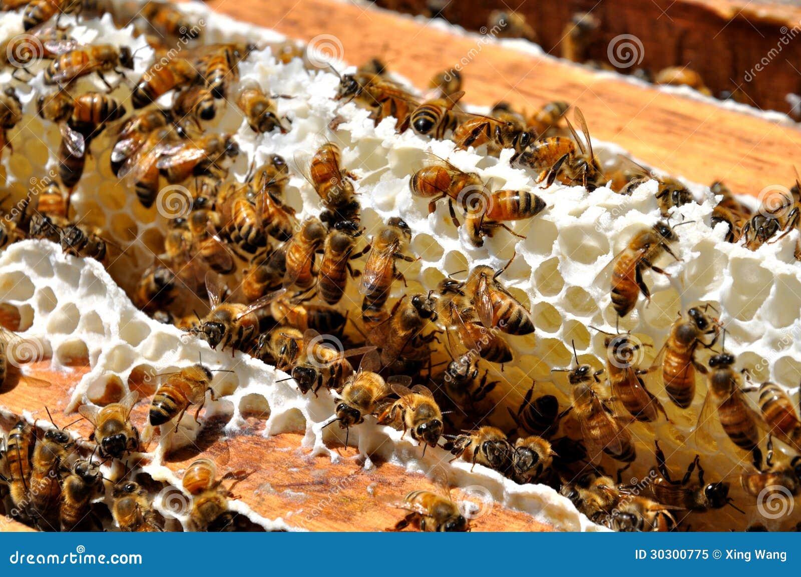 De Bijen van de honing