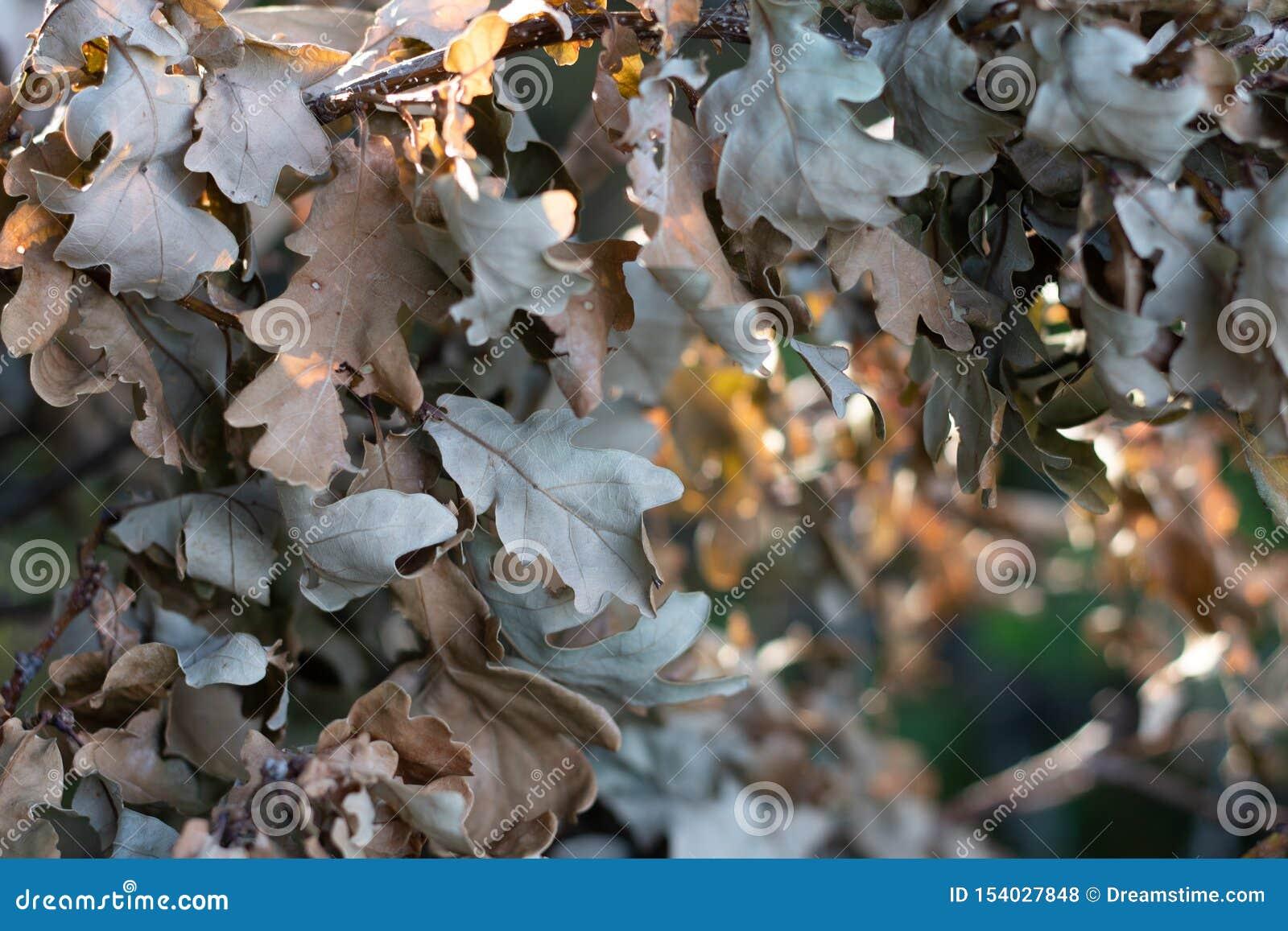 De bladeren drogen de herfst