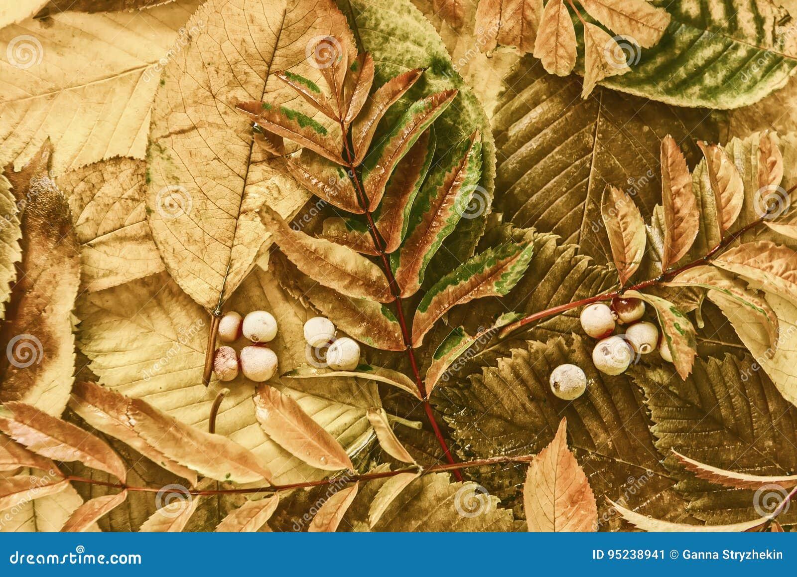 De bladeren en de bessen van de herfst