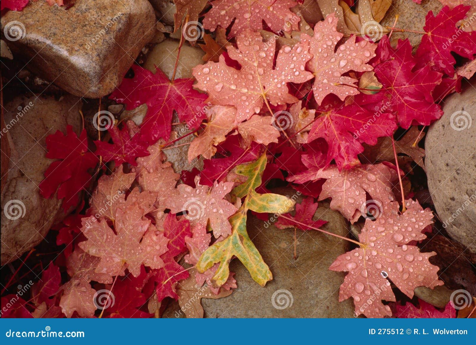 De bladeren en de rotsen van de herfst