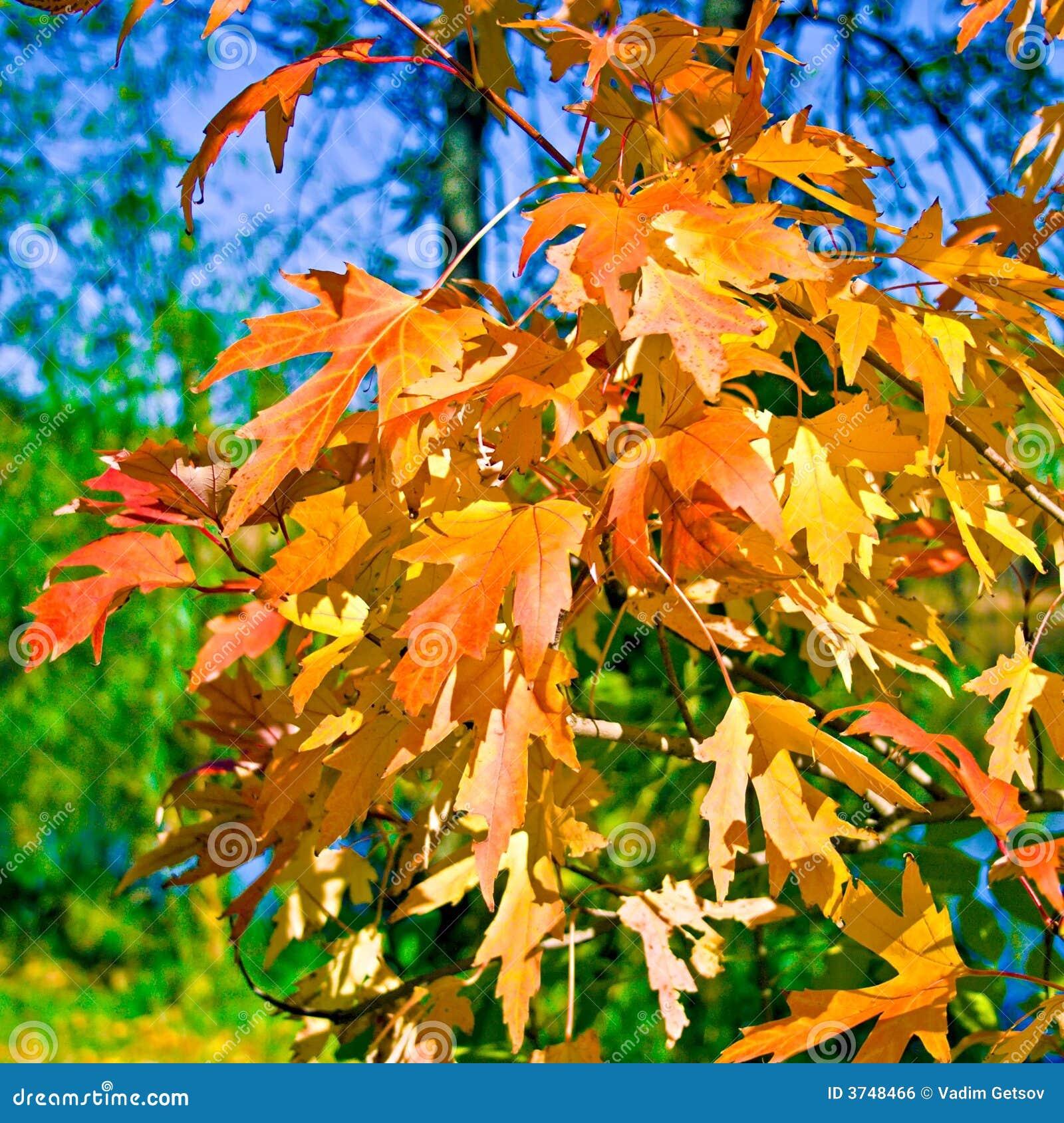 De bladeren van de daling