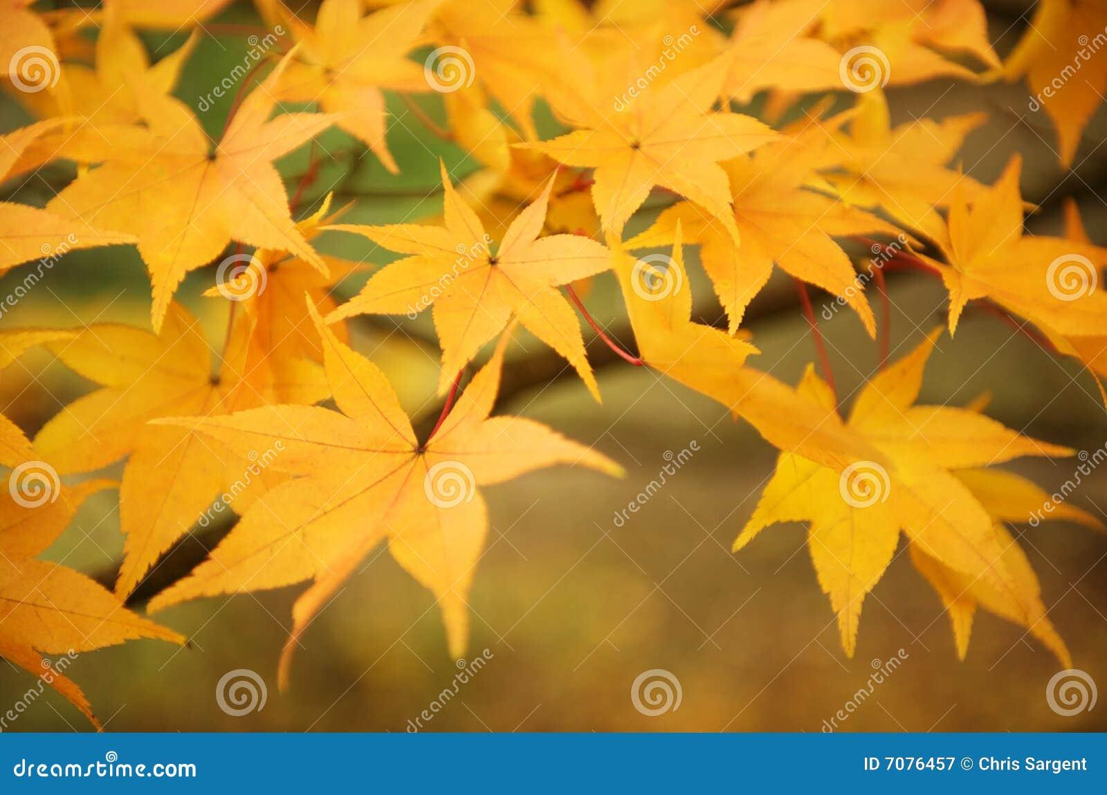 De bladeren van de daling in een bos