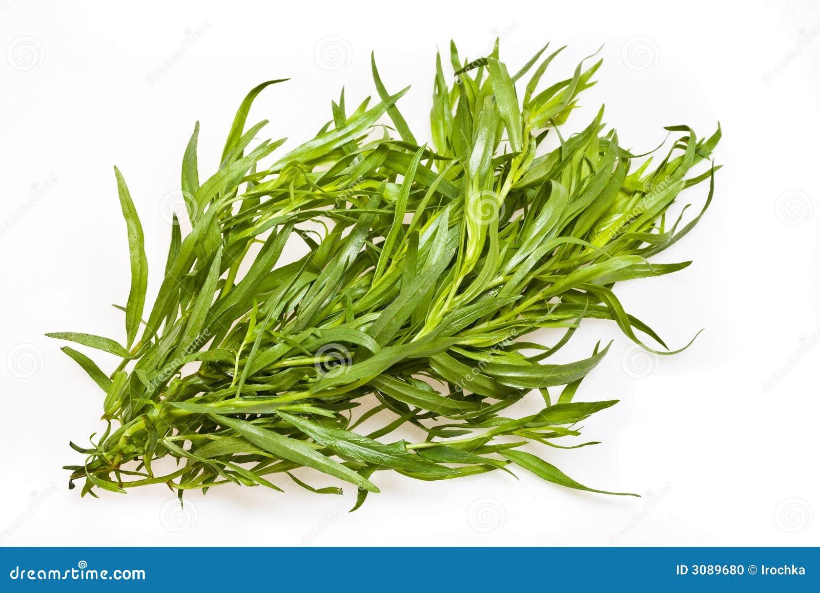 Different herbs royalty free stock image image 16265346 - De Bladeren Van De Dragon Stock Foto