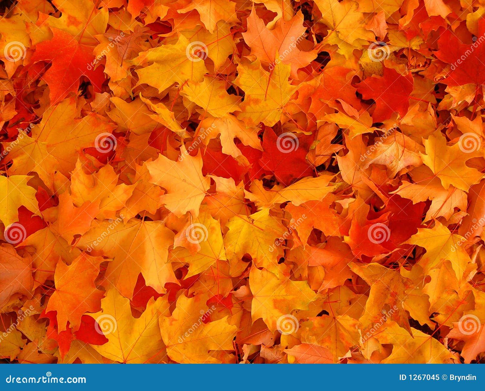 De bladeren van de herfst.