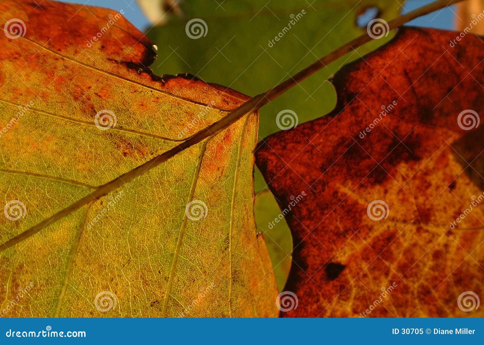 De bladeren van de herfst