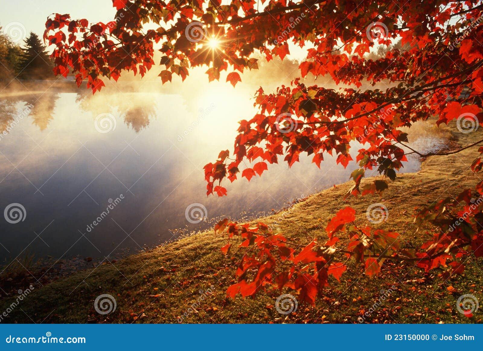 De bladeren van de herfst over nevelige vijver, CT